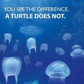 Plastic-bags-in-the-ocean-look-just-like-the-jellyfish-that-sea-turtles-eat-and-they-cant-tell-the-d
